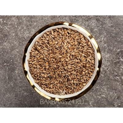 Семена Расторопши (отборные)